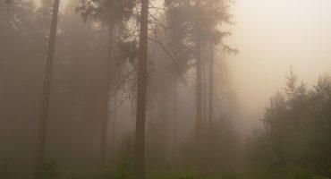 Destinazioni europee: la Foresta Nera