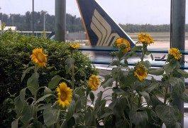 Top 10 – Gli aeroporti meglio attrezzati al mondo!