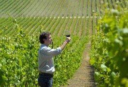 In Cile, seguendo la rotta del vino – 1ª parte