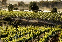 In Cile, seguendo la rotta del vino – 2ª parte