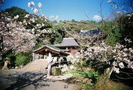 Destinazioni illuminanti: gli 88 templi giapponesi