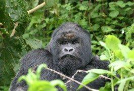 Visita il Parco Nazionale dei Vulcani in Ruanda!