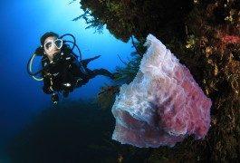 Mondo subacqueo: Dive Travel Show, seconda immersione!