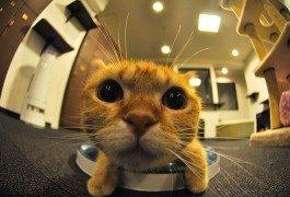 Il binomio gatto – caffè che non ti aspetti
