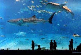 Presto a Singapore il più grande acquario del mondo
