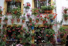 In Spagna a maggio, alla scoperta dei cortili di Cordova!