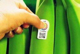 Ecuador, quando le banane fanno da ambasciatore