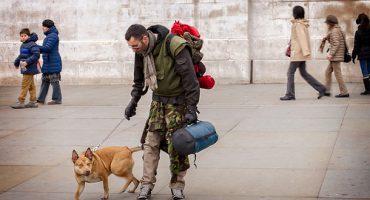 Viaggiare con gli animali: informazioni utili