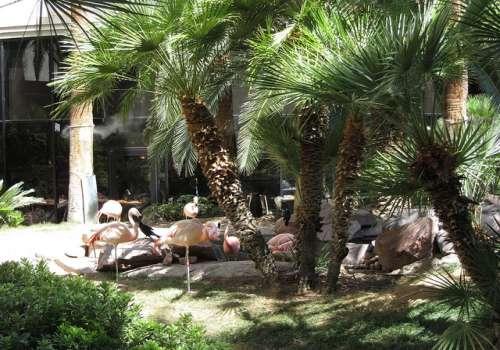 Wildlife habitat del Flamingo Hotel