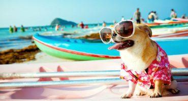 Al mare con fido: le migliori spiagge dog-friendly in Italia