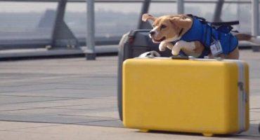 Il cane Sherlock di Klm che riporta gli oggetti smarriti