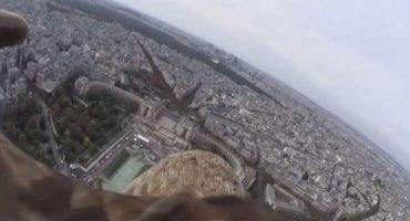 Un'aquila in volo sopra i cieli di Parigi e Londra