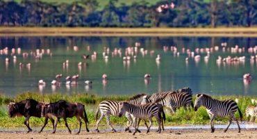 I più bei parchi naturali della Tanzania