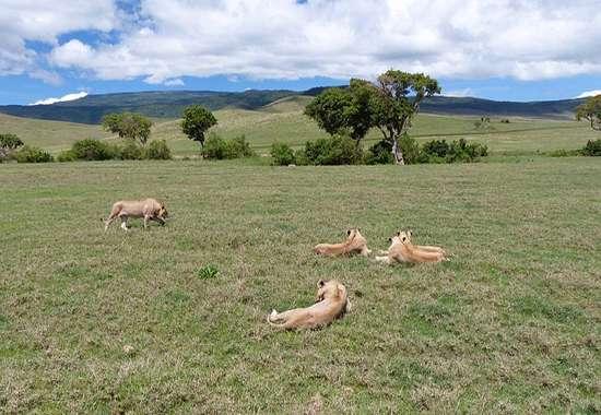 Riserva Naturale di Ngorongoro