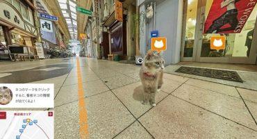 Cat Street View, il Giappone con gli occhi di un gatto