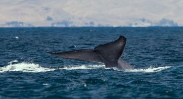 Whale watching, avvistare le balene in Irlanda