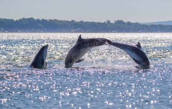 Delfini al largo del Mar del Nord