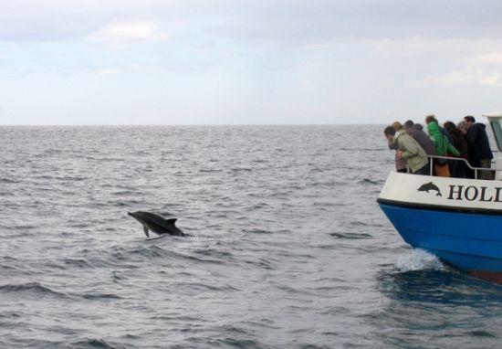 whale5