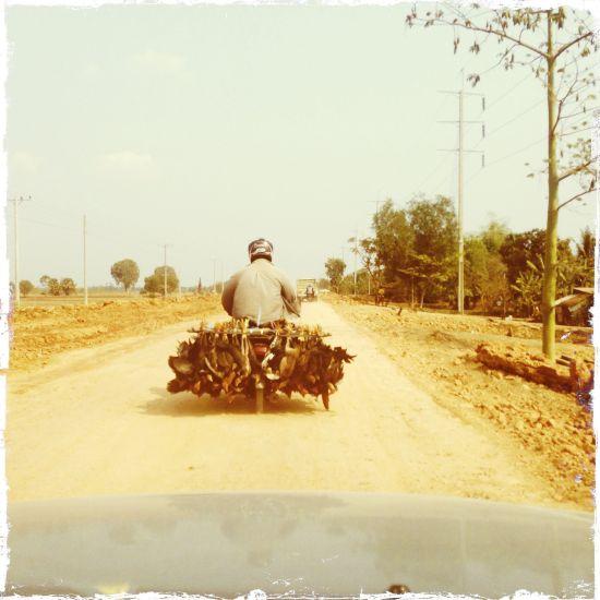 Motociclista con....con galline vive al seguito!