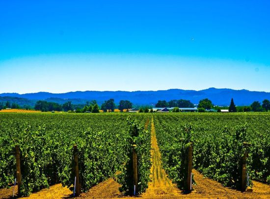 Sonoma County (California, USA)