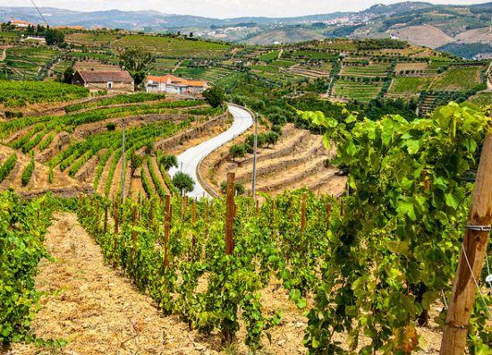 Vale do Douro (Portogallo)