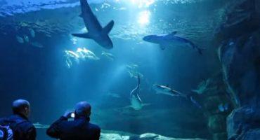 Airbnb regala una notte con gli squali a Parigi