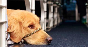 Volare con fido: il trasporto degli animali con le compagnie aeree