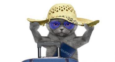 In viaggio con micio: i consigli per viaggiare con il vostro gatto
