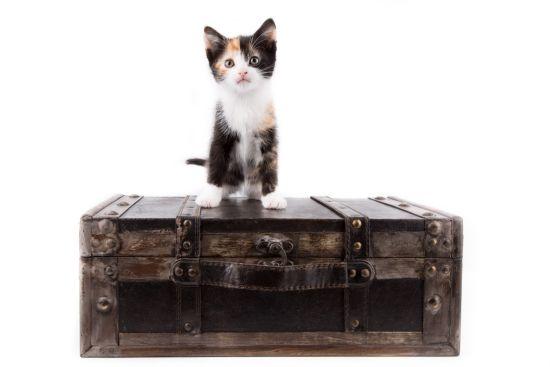 cat-in-suitcase