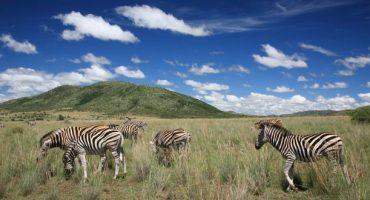 Top 10: i migliori safari nel mondo