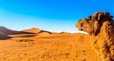 Cosa fare e vedere in Marocco