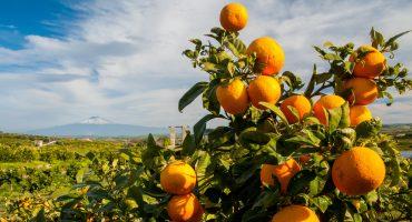 Road trip in Sicilia: viaggio nel cuore del Mediterraneo